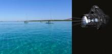 Mar Abierto - Una cámara, un momento y un encuadre adecuados son la mejor receta