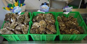 Mar Abierto - Los 'fruits de mer' de la comarca de Sète tienen reconocida fama i